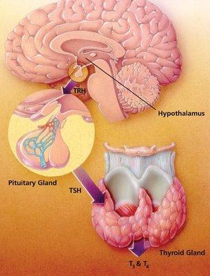 понижено ниво на щитовидни хормоните