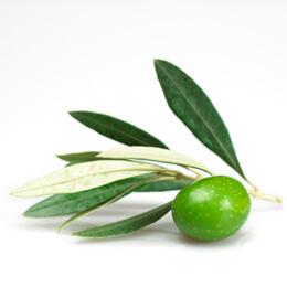 Маслина билка