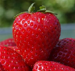 Хапвайте ягоди за здраве