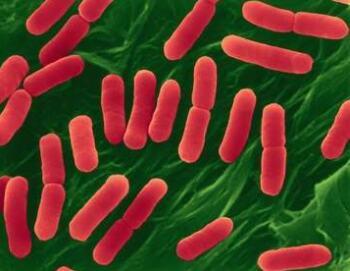 Пробиотиците се справят с Е. колите