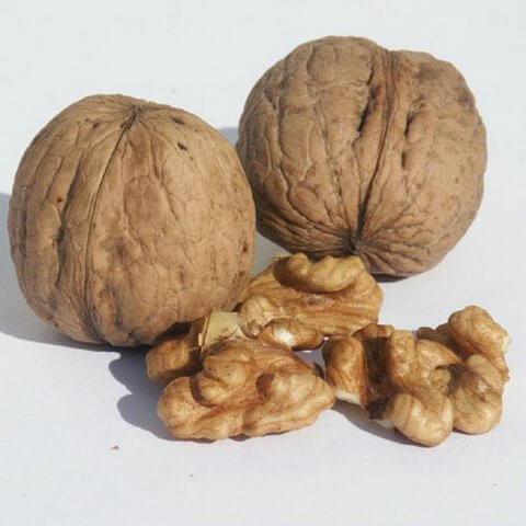 полезните действия на орехите