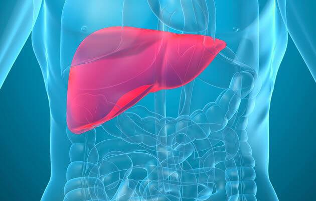 Черният дроб – супер героят в битката с токсините
