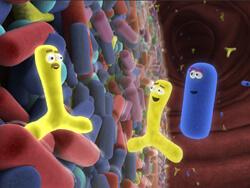Каква е връзката между пробиотиците и метаболитното здраве?