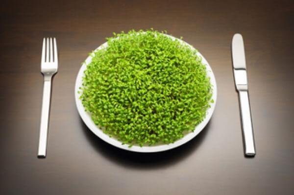 Хлорела – суперхрана с уникални детоксикиращи свойства
