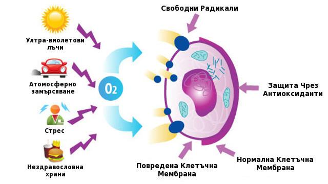 Антиоксидантите в подкрепа на зрението
