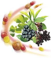 Предимствата на Алфа-липоевата киселина – един от най-мощните антиоксиданти