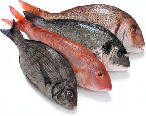 тлъста риба