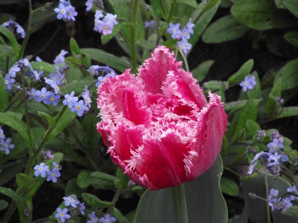 красива кожа през пролетта