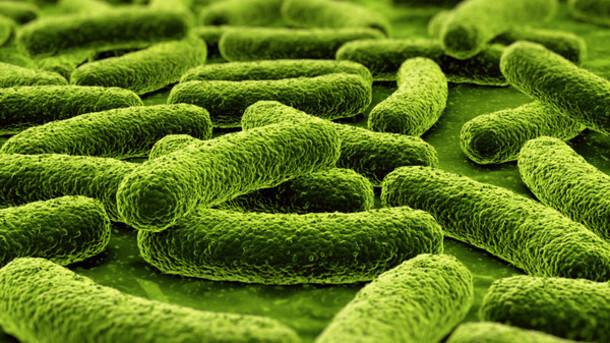 пробиотични добавки