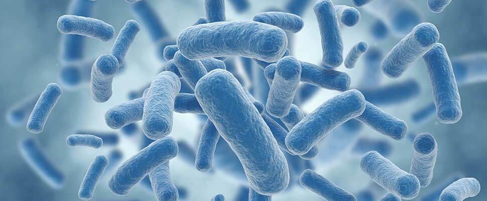 Добри бактерии