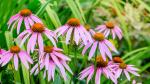 Защита срещу вирусите с билки